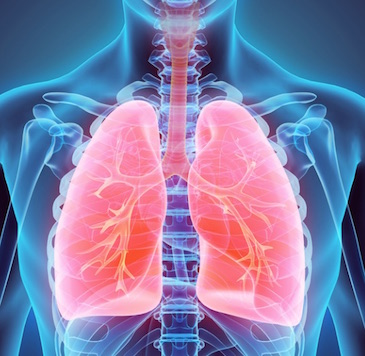 serrapeptase and lung disease
