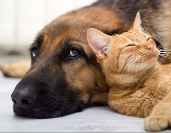 Pets - NattokinaseHeartHealth