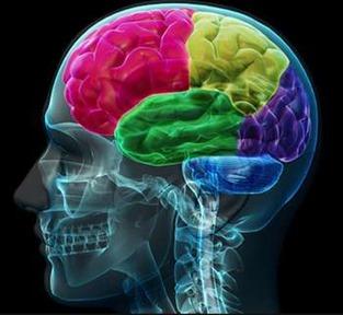 Serrapeptase and Brain Health
