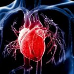 Serrapeptase and Heart Health