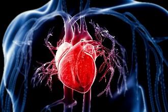 Serrapeptase and Heart Health